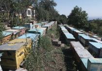 С исчезновением пчел на Земле может наступить и конец света