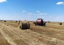 В Калмыкии травы нет. Для заполнения сенников требуется более одного миллиарда