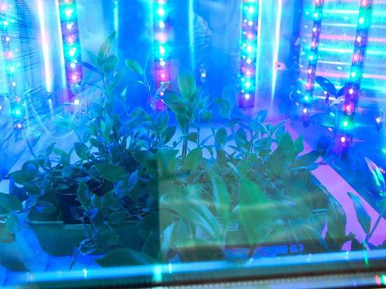 Волгоградские ученые разработали фитотрон для выращивания растений