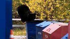 Обед косолапого: медведь поел из мусорки на въезде в Ноябрьск