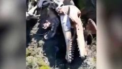 Непонятное животное: в Ямбурге нашли загадочный скелет