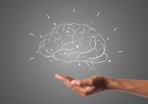 Врач и телеведущий Александр Мясников назвал самые эффективные способы замедлить старение мозга