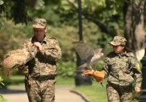 Отряды тренированных соколов и ястребов спасут город от ворон