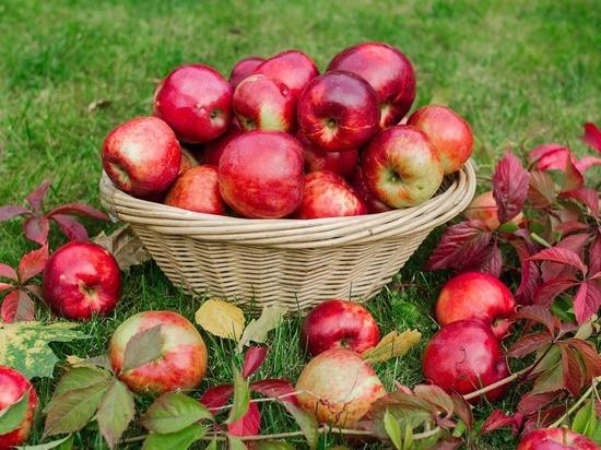 19 августа: Категорические запреты в День Яблочного Спаса