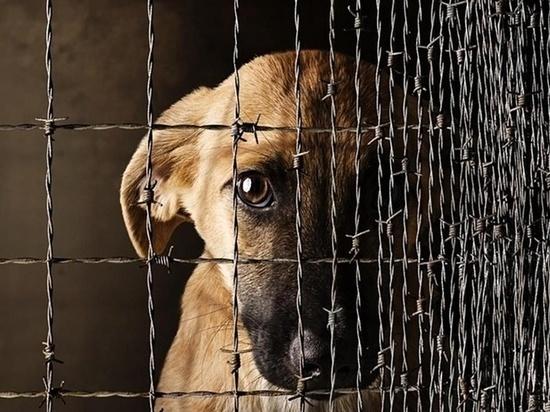 В Казахстане ежегодно уничтожается около 350 тысяч бродячих животных