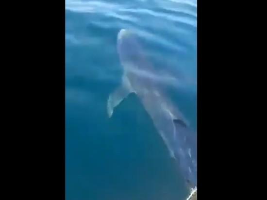 Акула напала на рыбаков у острова Русский