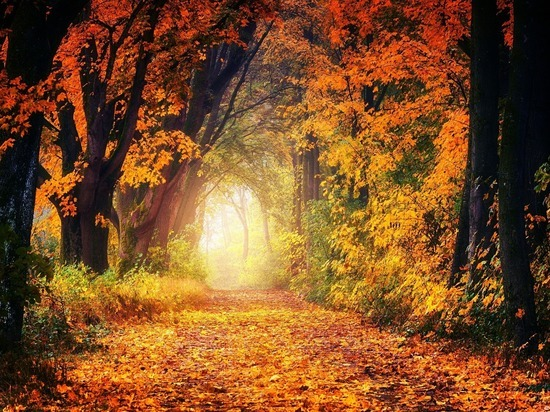 Астрологи обозначили ту сферу жизни каждого знака зодиака, в которую осень принесет ветер перемен