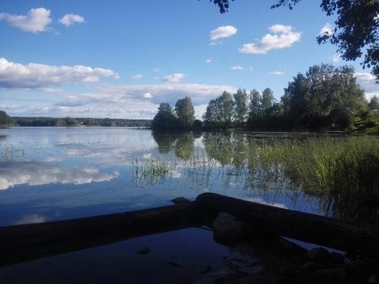 Больная рыба и затхлый запах: жители Ведлозера обеспокоены состоянием местного озера