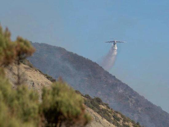 Масштабный лесной пожар под Анапой полностью потушен