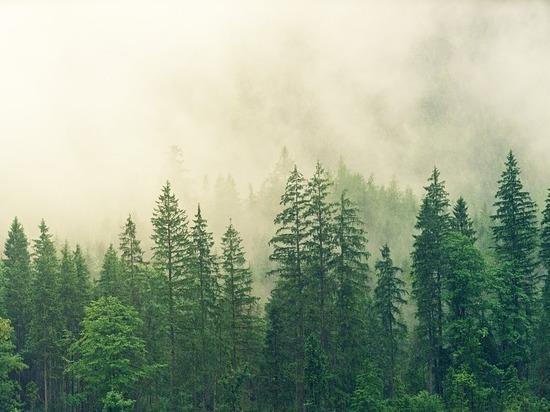 В Бурятии пункт отгрузки древесины работал без бумаг