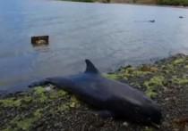 25 мертвых китов из-за разлива нефти: на Маврикии начались народные волнения