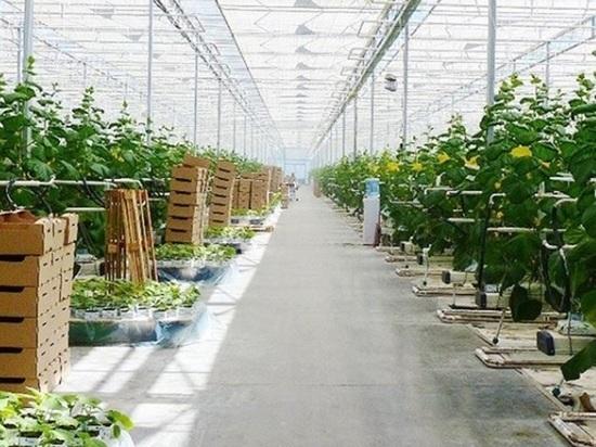 Владимир Владимиров: производителям Ставрополье помогут в развитии
