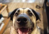 Невельские полиция и прокуратура отказали в удовлетворении жалобы и возбуждении уголовного дела хозяйке убитой собаки по кличке Пиф