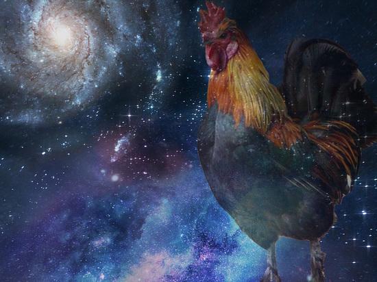 Что принесет каждому знаку Петух – хозяин сентября по китайскому календарю