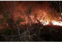 После крупного пожара в заповеднике под Анапой возбуждено дело
