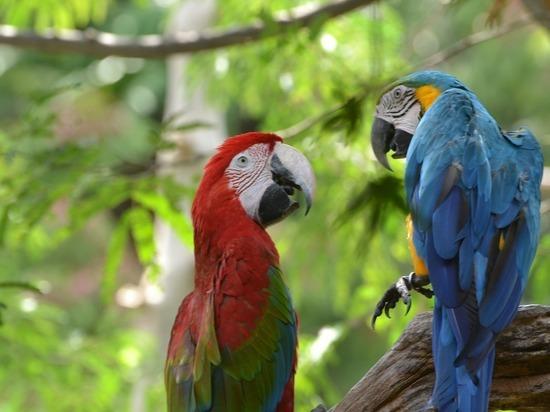 Каких попугаев волгоградцы могут научить говорить