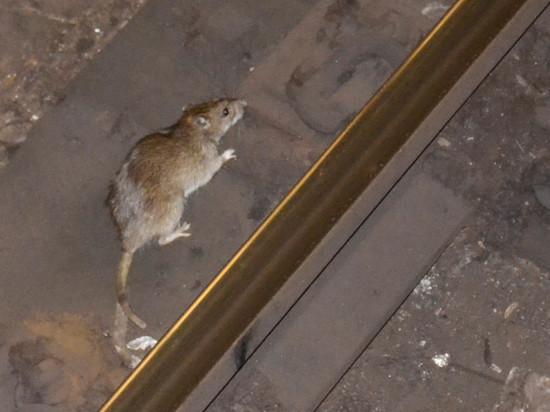 «Крысы правят городом». Городской ревизор раскритиковал мэра де Блазио за сокращение расходов на уборку мусора