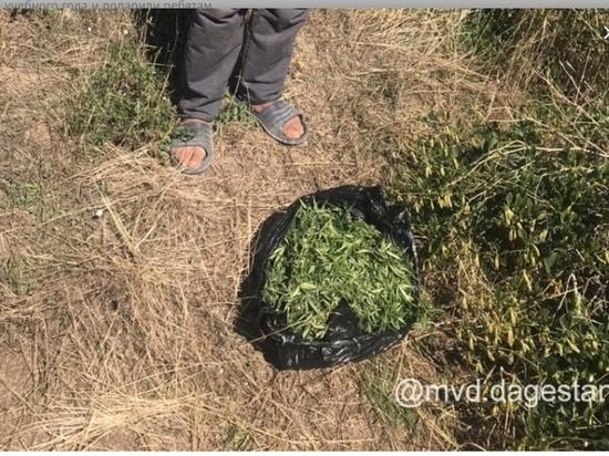 Жителя Дагестана поймали с килограммом марихуаны