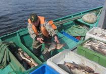 На Ямале с начала года поймали больше 5 тысяч тонн рыбы