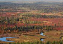 Справились своими силами: на Ямале за сезон потушили 119 природных пожаров