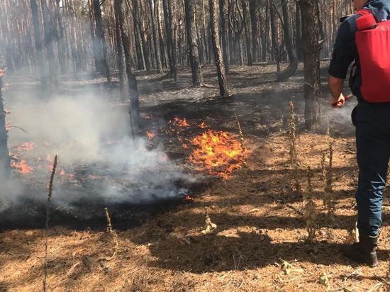 Площадь лесного пожара в Тарасовском районе Ростовской области достигла 1200 гектаров, сообщает Департамент лесного хозяйства по ЮФО