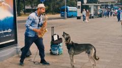 Собака с музыкальным слухом сорвала аплодисменты зрителей: видео