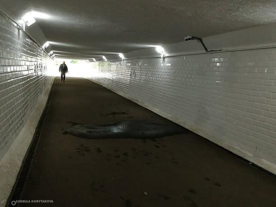 Отремонтированный тоннель на улице Максима Горького в Петрозаводске «дал течь»