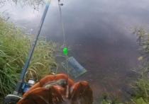 В Тверской области рыбак поймал в Волге краснокнижную черепаху