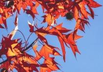 Осень в этом году начнется 8 сентября