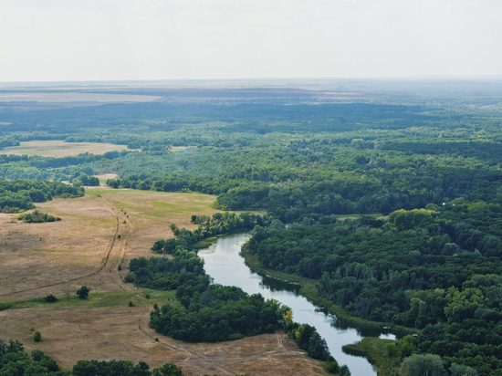 В Волгоградской области продлили запрет на посещение лесов
