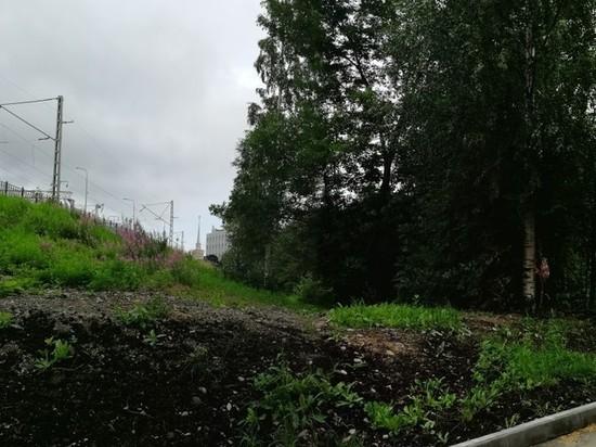Ради автомобильной парковки около вокзала Петрозаводска срубят часть зеленого сквера