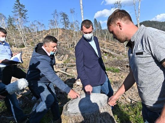 Дегтярёв запретил вырубку леса на Амуте