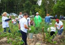 Экологическая акция «Наш лес
