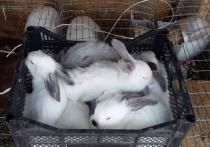 В Новом Уренгое бизнесмен Зайцев выиграл грант губернатора на разведение кроликов