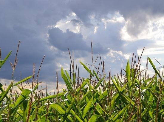 В Смоленской области в среду будет пасмурно, но тепло