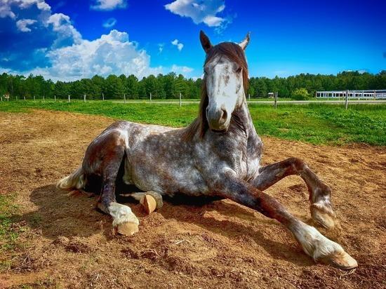 В Британии фермеры устроили отель над лошадиными стойлами