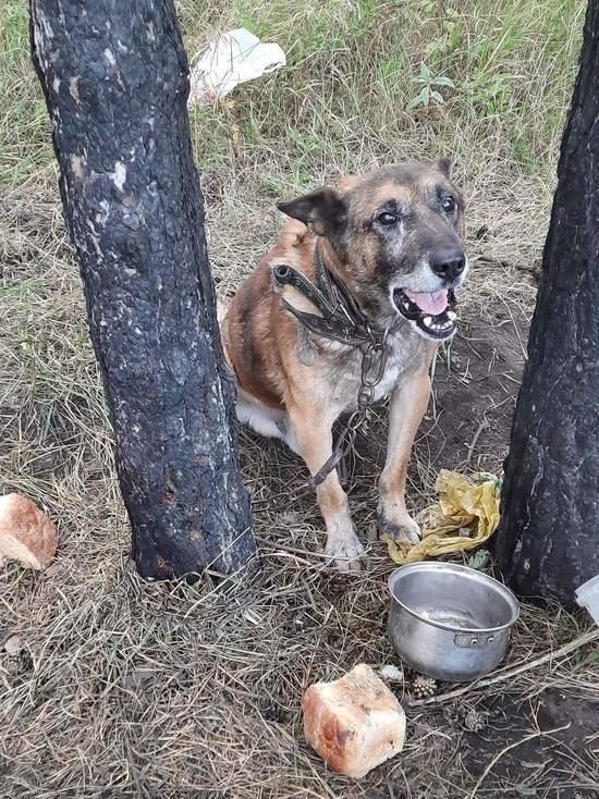 В Белове умерла собака, которую приковали на цепь в лесу