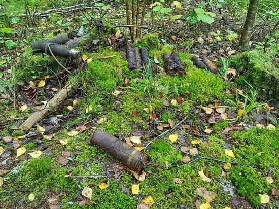 250 взрывоопасных предметов уничтожили саперы в Сычевском районе