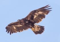 В Тверской области обнаружены краснокнижные птицы