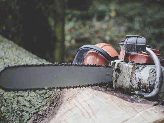 Жителя Марий Эл осудили за незаконную рубку леса