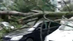 Опубликованы кадры последствий урагана в Санкт-Петербурге