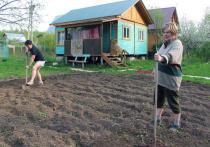 Вступил в силу закон, разрешающий садоводам и огородникам проводить свои собрания и голосовать по всем важным вопросам в онлайн-формате