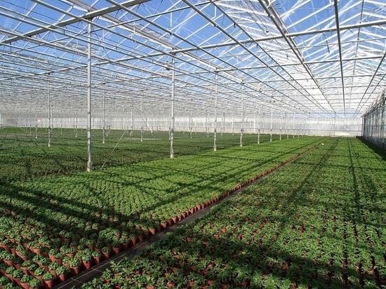 На строительство тепличного комплекса в моногороде в Тверской области выделят первые миллионы