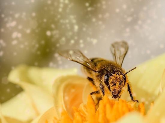 Пчелы на планете важнее людей