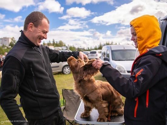 В Петрозаводске провели выставку собак