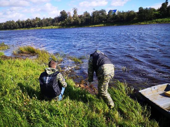 В реке Сясь у детского санатория нашли пакет с женскими руками и ногами