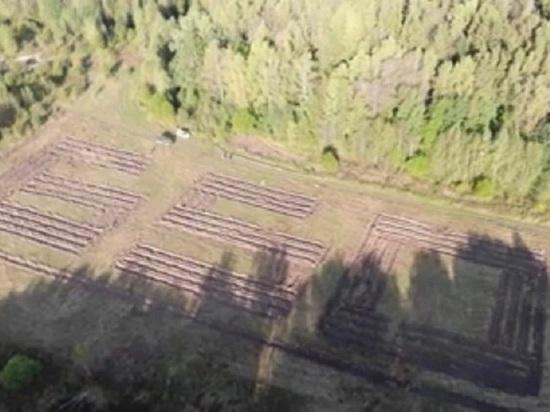"""Вылетающие из Калуги увидят лес в форме числа """"650"""""""
