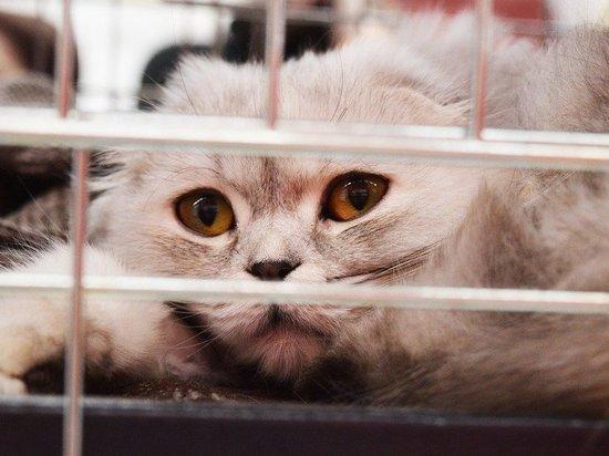 Ликвидацией проблем с бездомными животными займутся в Новокузнецке
