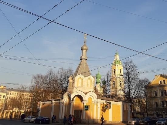 Петербургские экологи приглашают горожан помочь отыскать самые интересные деревья города