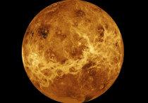 Теорию о том, что в атмосфере Венеры может быть жизнь, подтвердило Королевское астрономическое общество Британии